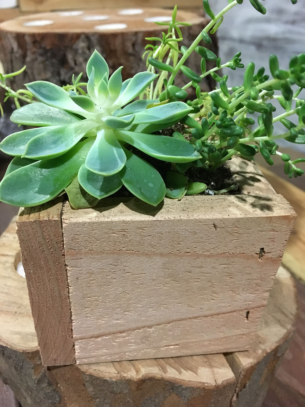 Planter Boxes Planters And In The Corner On Pinterest: Succulent Planter Box
